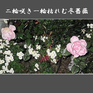 rosetwo22222.jpg