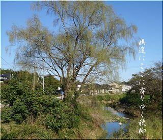 akiyanagisoma1111.jpg