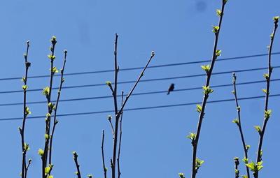 birdvoice1.jpg