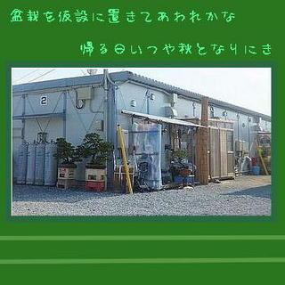 bonsai1232.jpg