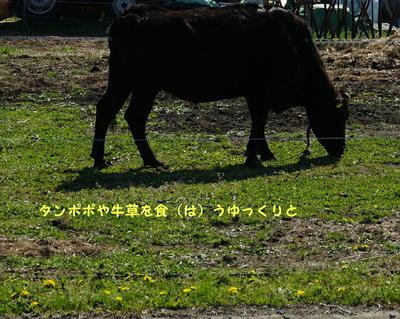 bullspring1.jpg