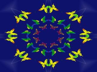 butterflyyyyy133.jpg