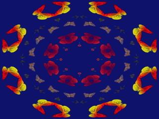 butterflyyyyy13344.jpg