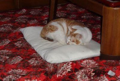 cattt2.JPG