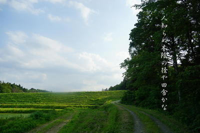 countrylane111.jpg