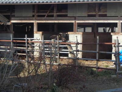 cowspring1111.jpg