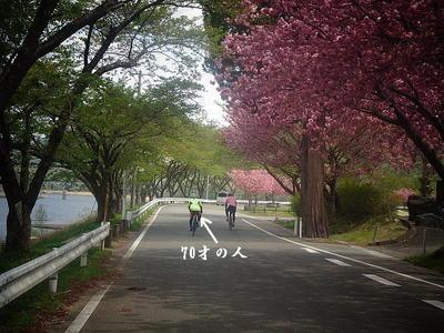 cycleageman1.jpg