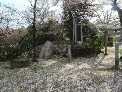 daiishisakura11.jpg