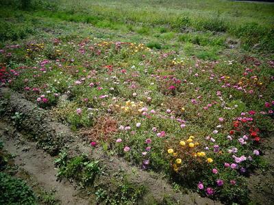 fieldflower11.jpg