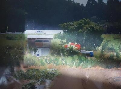 fieldflower1111.jpg