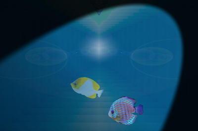 fishmystery111.jpg