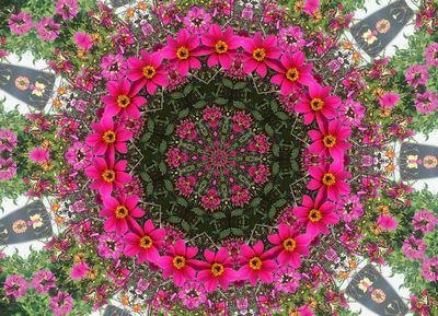 flowercircle2.jpg