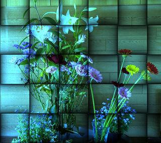flowerrrrr1234new122233344444555.jpg