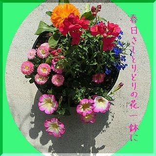 flowerssssss1111.jpg