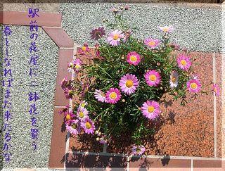 flowerssssss1111111222.jpg