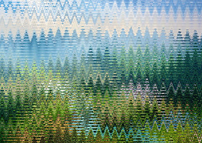 forest34512.jpg