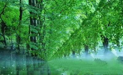 foreststone111.jpg