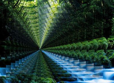 foreststream4.jpg