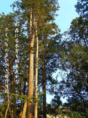 foresttree1111.jpg