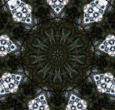 forestwindow111.jpg