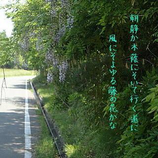 fujiasa1111.jpg