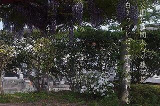 fujiii12345677eeee2.jpg