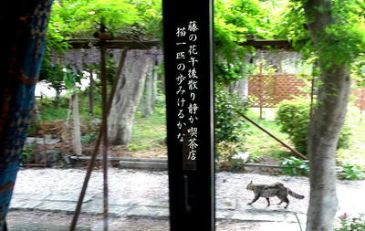 fujinedo333.jpg