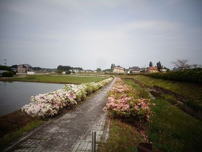 fujinohanaaaa12344.jpg