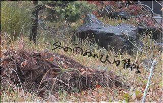 fushiishi11111.jpg