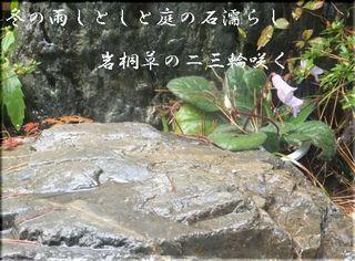 fuyuamee1111111.jpg