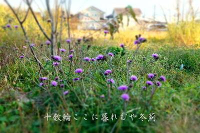 fuyuazamikureru1.jpg
