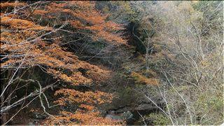fuyumomijiiii111.jpg