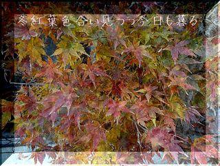fuyumomijiiiii11111.jpg