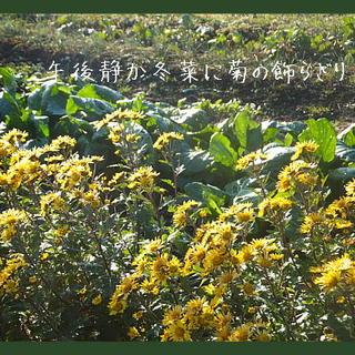 fuyunaiku11111.jpg