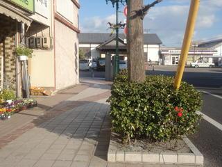 fuyusoubiiii111.jpg