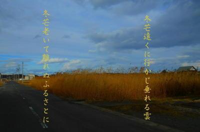 fuyususuki111.jpg