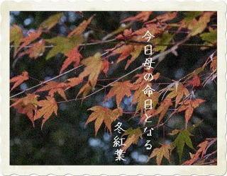 fuyuuuuu123455566677.jpg