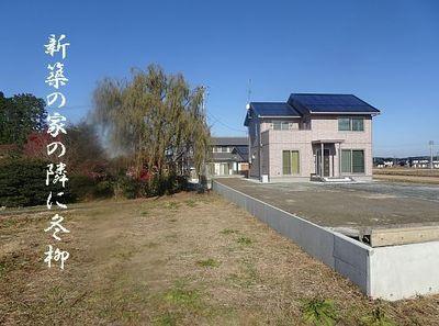 fuyuyanagiii1.jpg