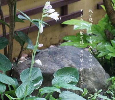 giboushi111.jpg