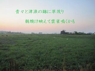 grasssu111.jpg