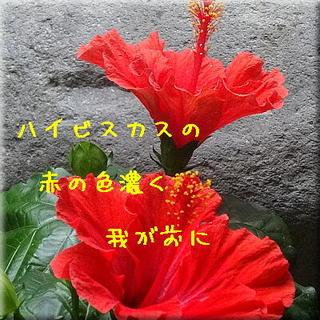 haibisukasu111111.jpg