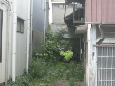 haioku11112.jpg