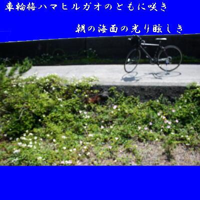 hamakuruma1111.jpg