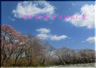 hanakumo11.jpg