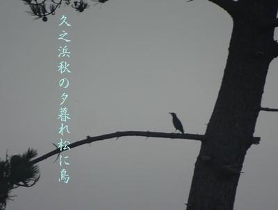 hisanohamabird1.jpg