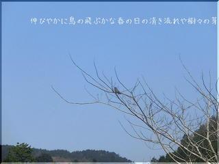 hiyodoriii1111.jpg