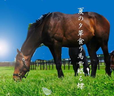 horsechou1.jpg