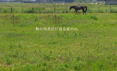 horseeesum11.jpg