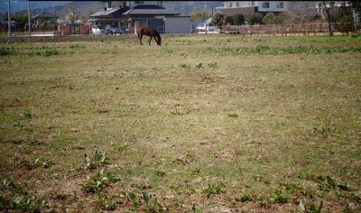 horsess123.JPG