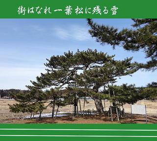 ichiyouarenge1111.jpg